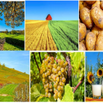 Jurusan Studi Favorit di PTN Jerman – FARMING / AGRICULTURE