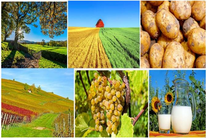 jurusan studi favorit di PTN Jerman - Farming - Agriculture